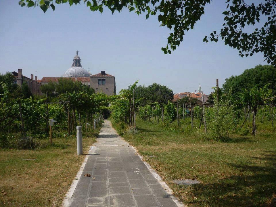 erbe matte orto venezia